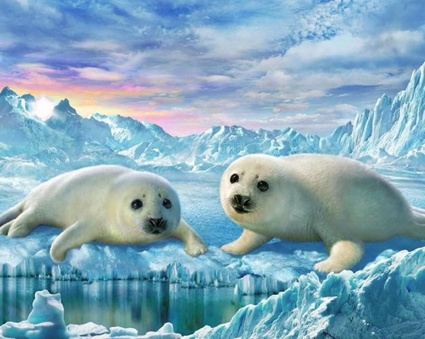 Seals Pair - Paint by Diamonds - diamond-painting-bliss.myshopify.com