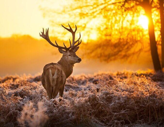 Setting Sun & Deer Painting Kit - diamond-painting-bliss.myshopify.com