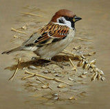 Sparrow DIY Painting Kit - diamond-painting-bliss.myshopify.com