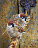 Sparrows Sitting on the Rope - diamond-painting-bliss.myshopify.com