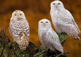 Three Stunning White Owls - diamond-painting-bliss.myshopify.com