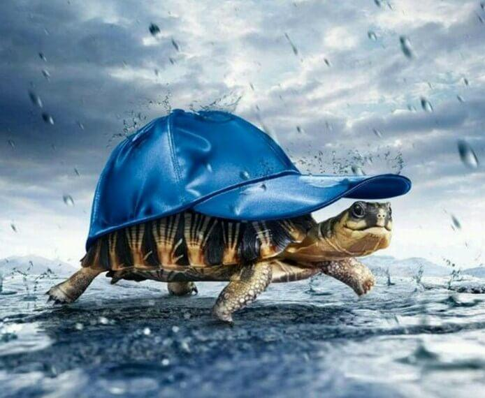 Turtle in a Hat - diamond-painting-bliss.myshopify.com