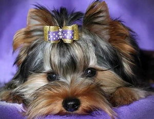 Yorkshire Terrier - Pant by Diamonds - diamond-painting-bliss.myshopify.com