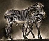 Zebras Hugging Diamond Painting - diamond-painting-bliss.myshopify.com