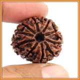 Ten (dus) Mukhi Rudraksha (with silver capping) , Zevotion Rudraksha - Zevotion, OnlinePrasad.com  - 3