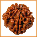 Two (Do) Mukhi Rudrakhsha - Nepal (with silver capping) , Zevotion Rudraksha - Zevotion, OnlinePrasad.com  - 2