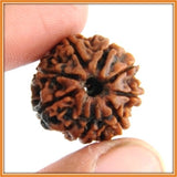 Eight (Aath) Mukhi Rudraksha (with silver capping) , Zevotion Rudraksha - Zevotion, OnlinePrasad.com  - 2