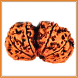 Gauri Shankar Rudraksha (with silver capping) for a Blissful married Life! - OnlinePrasad.com