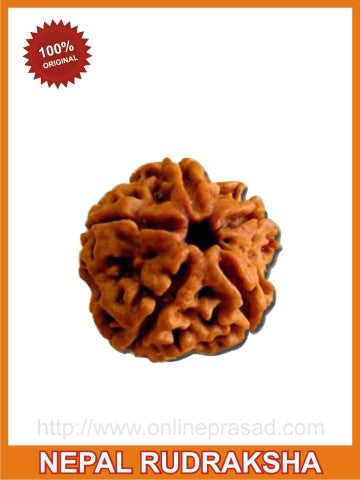 Five (Panch) Mukhi Rudraksha (with silver capping) - OnlinePrasad.com