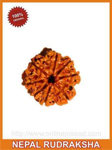 Eight (Aath) Mukhi Rudraksha (with silver capping) , Zevotion Rudraksha - Zevotion, OnlinePrasad.com  - 1