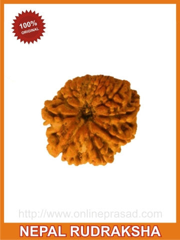 Ten (dus) Mukhi Rudraksha (with silver capping) , Zevotion Rudraksha - Zevotion, OnlinePrasad.com  - 1