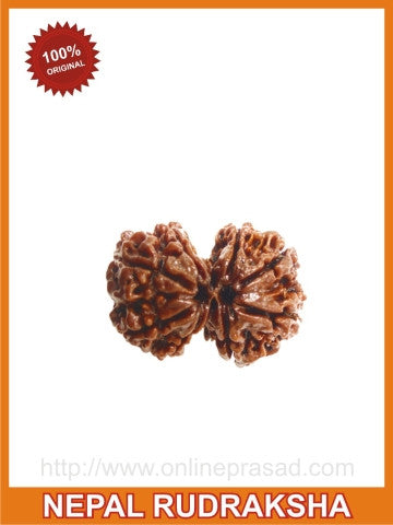 Gauri Shankar Rudraksha (with silver capping) for a Blissful married Life! , Zevotion Rudraksha - Zevotion, OnlinePrasad.com  - 1