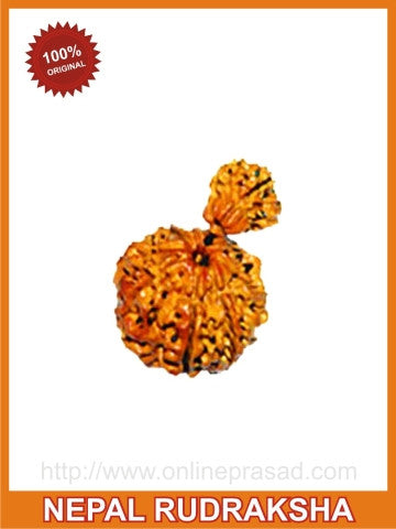 Healthy Child & Mother: Ganesh (Garbh) Gauri Rudraksha(with silver capping) - OnlinePrasad.com