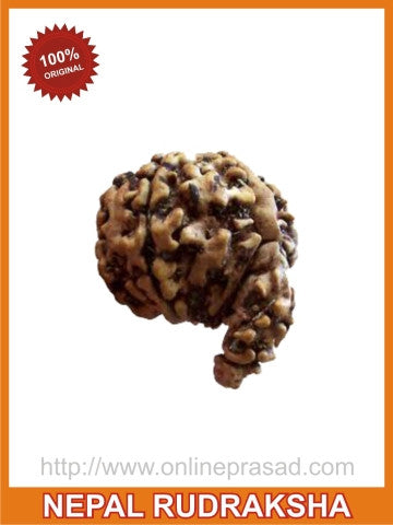 Wisdom & Wealth: Ganesha Rudraksha (with silver capping) , Zevotion Rudraksha - Zevotion, OnlinePrasad.com  - 1