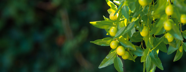 5 Reasons why Jojoba Oil is your best friend