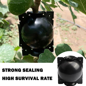 Plant Rooting Ball Plant Root Growing Box