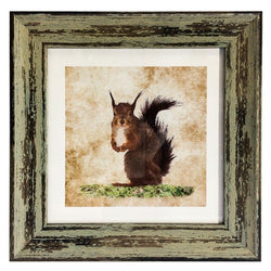 Framed Print - Squirrel