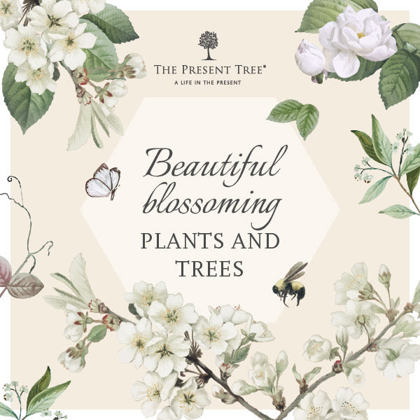 Flowering Plants and Trees