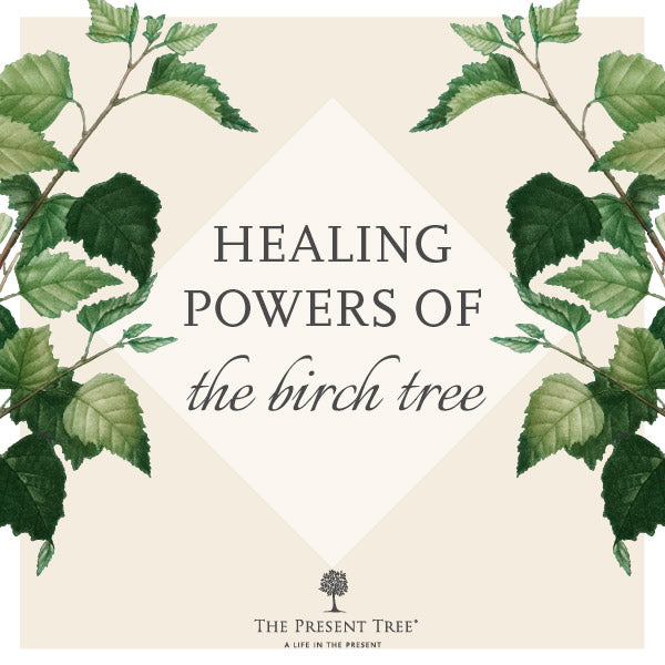 Healing Powers of the Silver Birch Tree