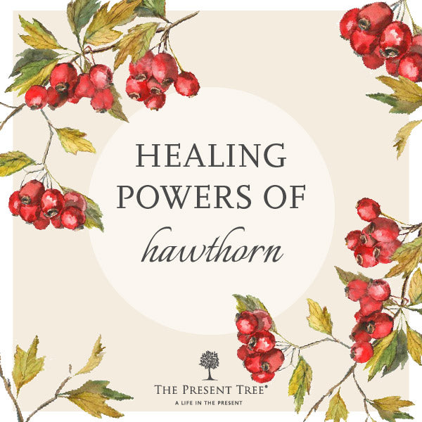 The Healing Powers of Hawthorn