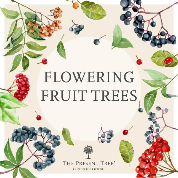 Best Fruit Trees