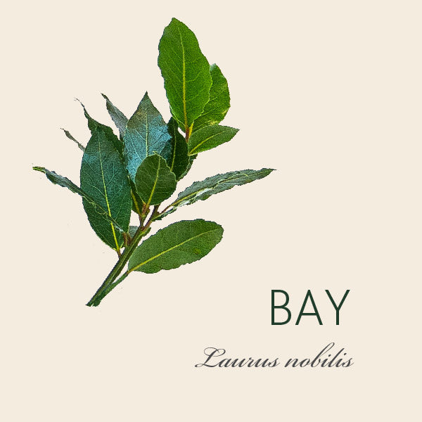 Every Bay tree has a story...