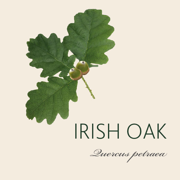 Every Irish Oak tree has a story...