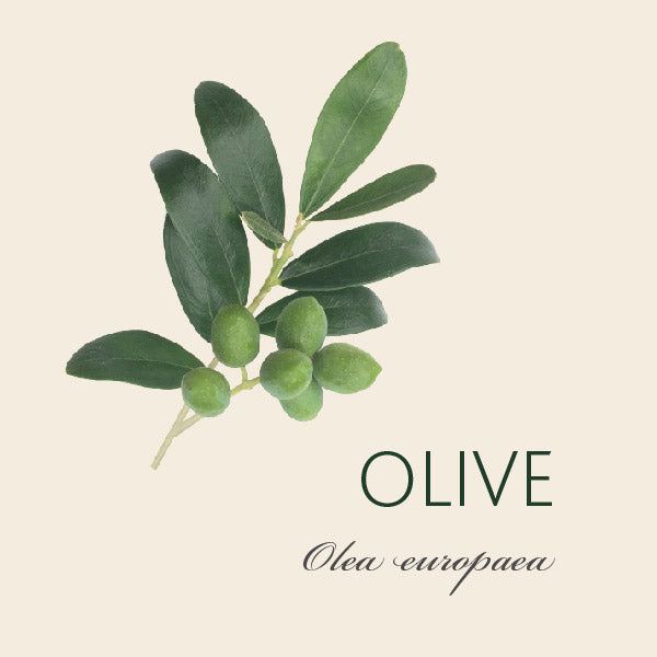 Every Olive tree has a story...