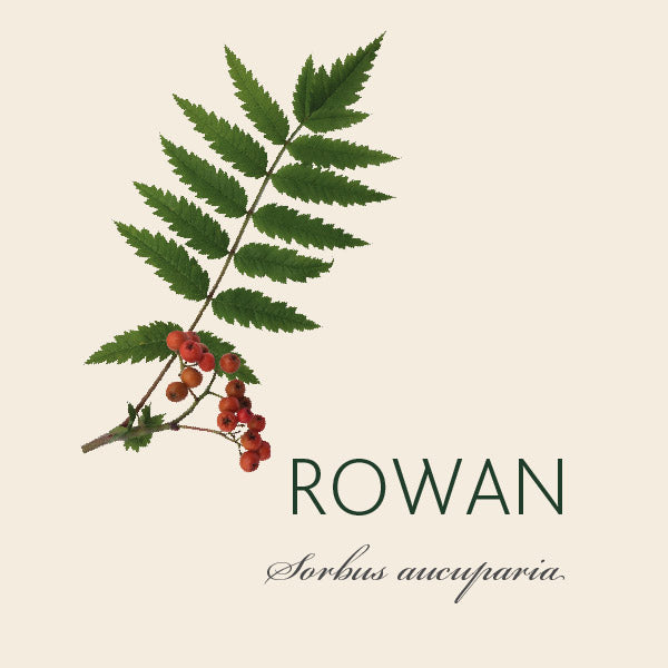 Every Rowan tree has a story ...