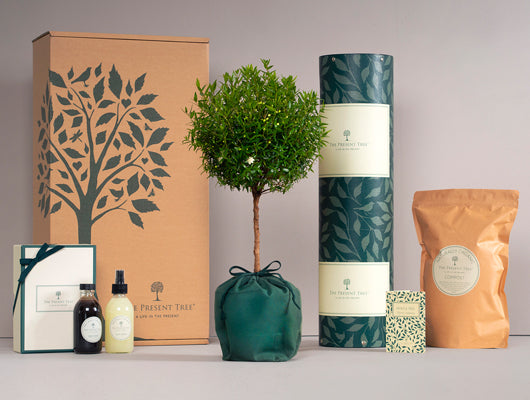 The Present Tree Collection Image