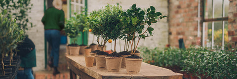 potted trees at The Present Tree