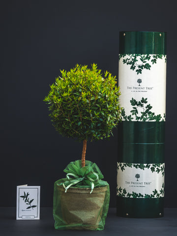 Myrtle tree gift