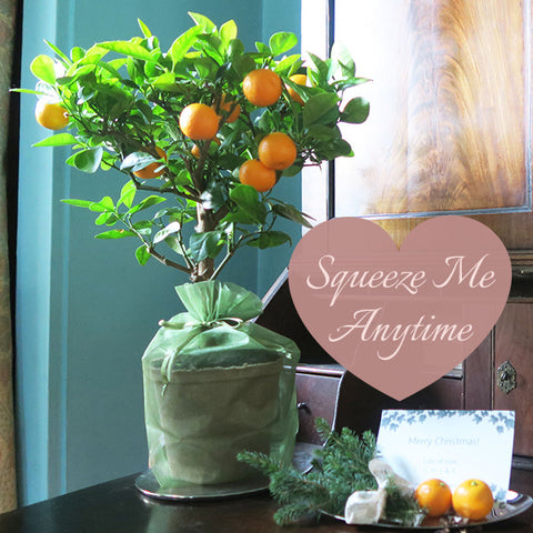 Orange tree gift with fruit