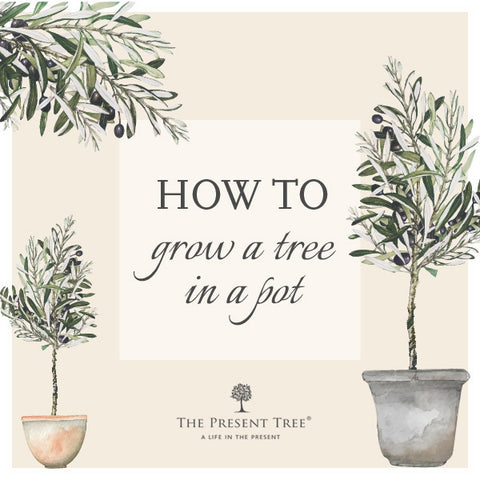 How to grow a tree in a pot