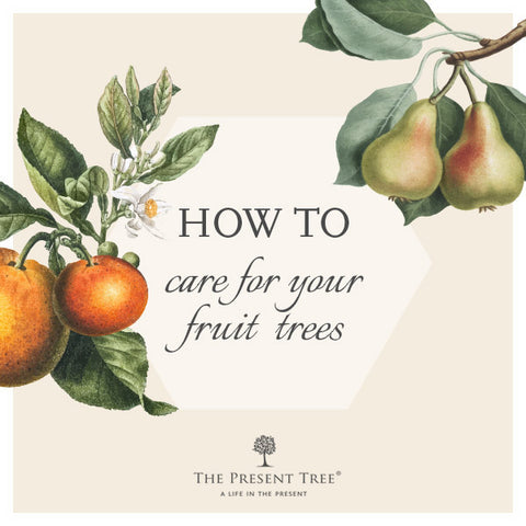 How to care for your fruit tree