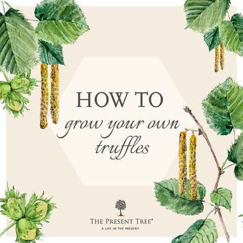 How to grow your own truffles!