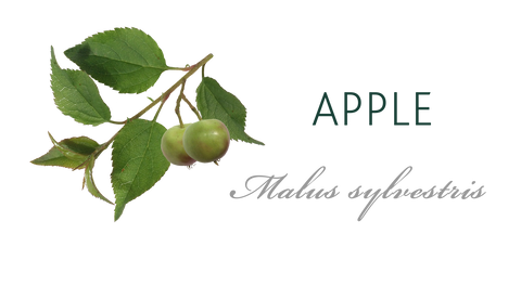 Apple Tree Meaning