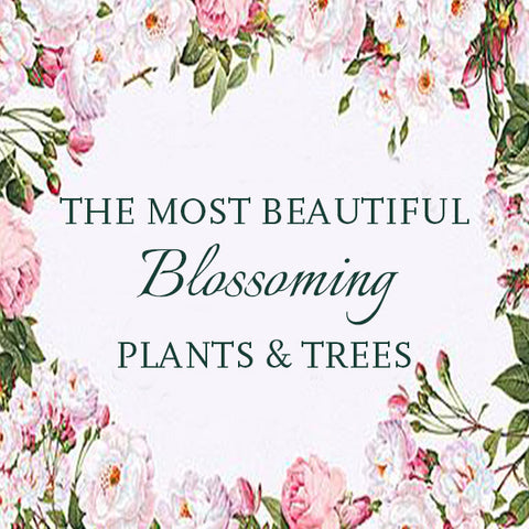 The most beautiful blossoming Plants and Trees