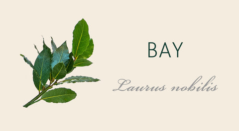 Bay tree meaning