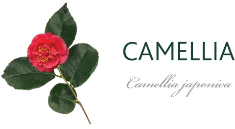 Camellia Tree Meaning