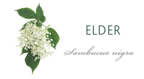 Elder Tree Meaning