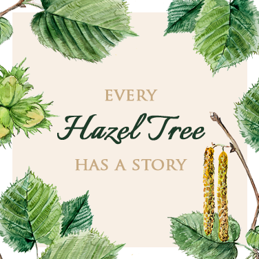 The Ancient Meaning Of A Hazel Tree Tree Symbolism The Present Tree