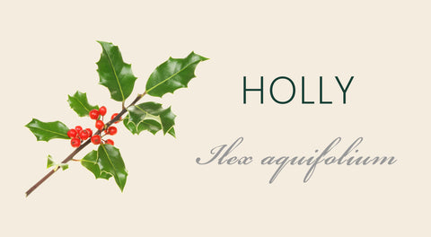 Holly Tree Meaning
