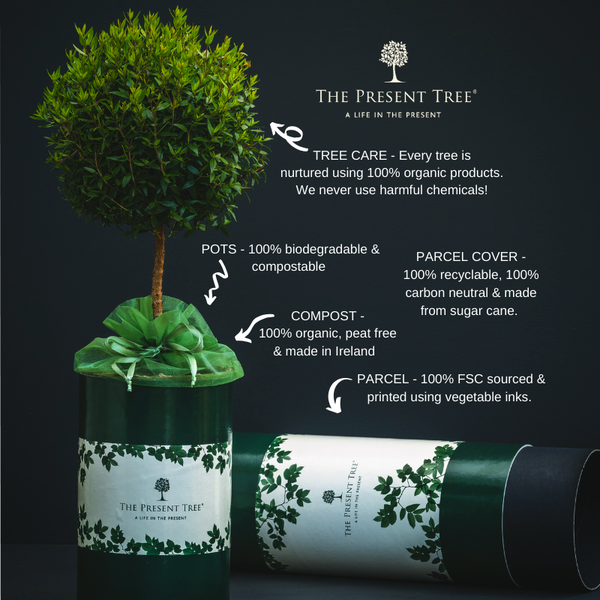 Biodegradable parcels at The Present Tree