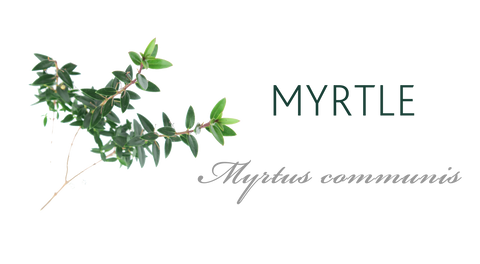 Myrtle tree meaning