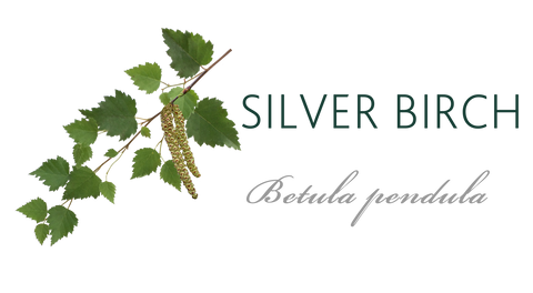 Silver Birch Tree Meaning