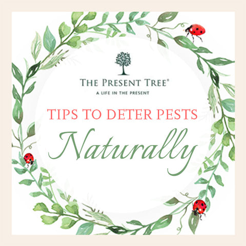 Eco-Friendly tips to deter pests naturally