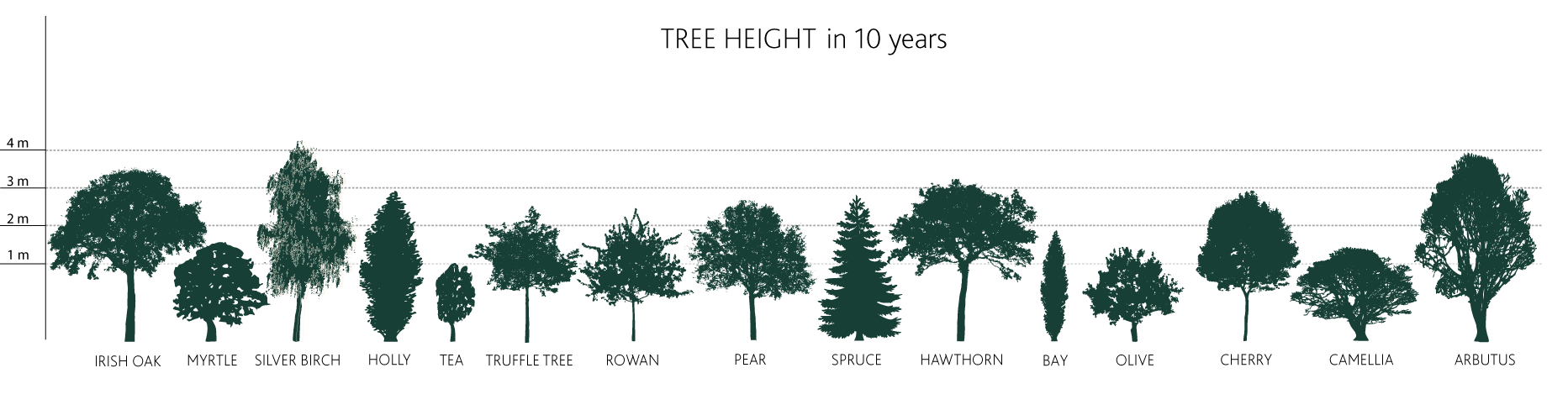 Tree Height in 10 years