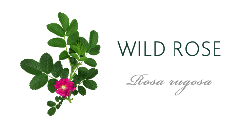 Wild Rose Tree Meaning