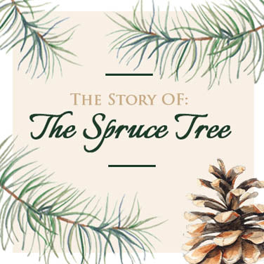 Christmas Tree Meaning.Spruce Tree Meaning Christmas Tree The Present Tree